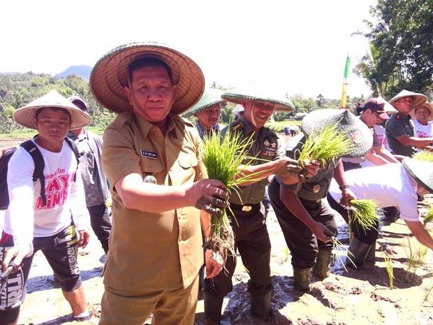 Bupati Bolmong Nixon Watung tampak bersama Dandim 2303 Bolmong Letkol Sampang Sihotang saat menanam padi bersama.