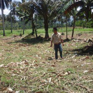 Jemy Mewoh saat berada dilokasi perkebunan