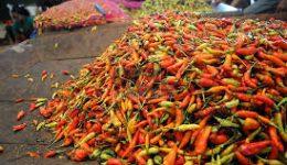 Lagi Merangkak Naik Rp100 Ribu Harga Rica di Pasaran Kotamobagu