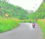 Bahu Jalan Tertutup Rumput, Jalan Passi Ditelantarkan !!!