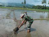 Potensi Swasembada Beras Masih Menjanjikan, Luas Panen Padi di Kotamobagu Capai 4.330 Hektar