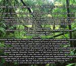 Menanti Jeratan Pidana Para Oknum Pejabat Boltim dalam KasusPerambahan Hutan Lindung