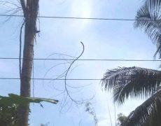 Menebang Pohon Dekat Kabel Listrik, Warga Diimbau Informasikan ke PLN