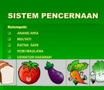 Proses Pencernaan Kalori dalam Tubuh