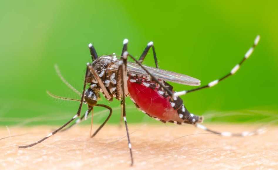 Dinkes Kotamobagu Sebut, Ada 22 Kasus Positif Virus Dengue