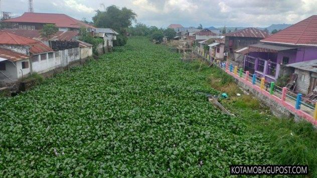 Setahun Dipimpin Bupati Royke Roring, Tondano 'Jadi Kota' Eceng Gondok