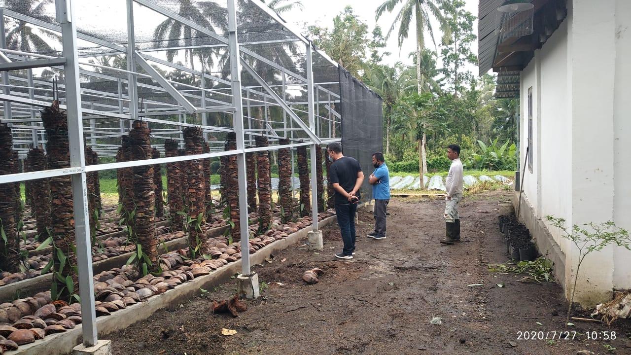 Terbuai Dengan Harga, Ismail Budidayakan Vanili di Kotamobagu