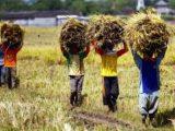 Ranperda Alih Fungsi Lahan Pertanian Kotamobagu Bakal Diusulkan DPRD
